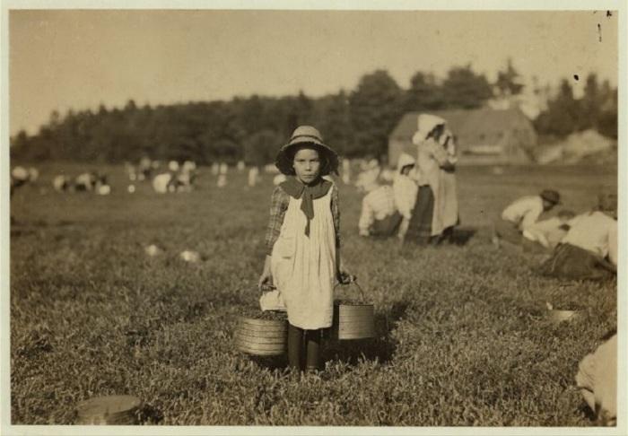 Сезонный сбор клюквы в сентябре 1911 года.