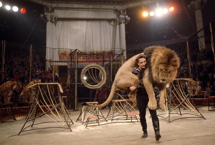 Укротитель зверей на арене Московского цирка. СССР, Москва, 1970 год.