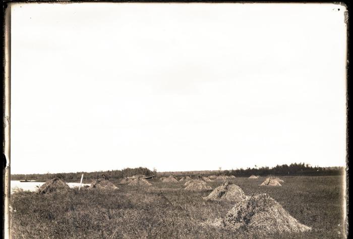 Покос травы на левом берегу реки Конда.