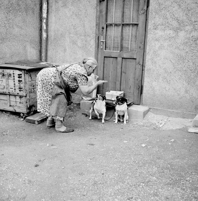 Непослушный пес. Германия, 1956 год.
