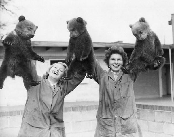 Первая фотография трёх бурых медвежат в Уипснейдском зоопарке. Великобритания, 1959 год.