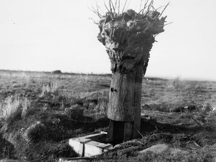 Замаскированный наблюдательный пункт в виде дерева.