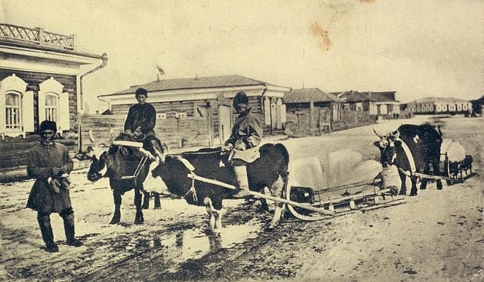 Якуты везущие глыбы льда на быках. Якутская область, начало 20 века.