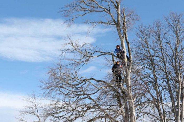 Тренеры команды США и Канады в масках шимпанзе сидят на дереве и наблюдают за хоккейным матчем своих команд на Зимней Олимпиаде в Сочи.