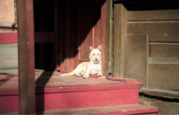 Собака на крыльце деревянного дома. СССР, Иркутск, 1988 год.