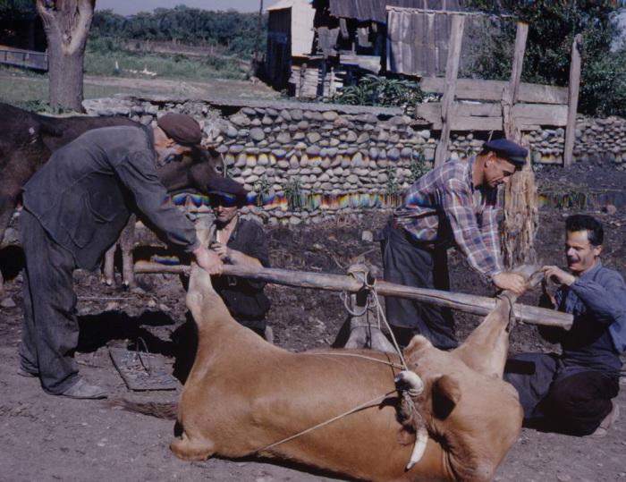 Нелегкая работа. СССР, Грузия, 1963 год.