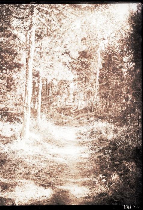 Тропинка в лесу ведущая к юрте Соровых.