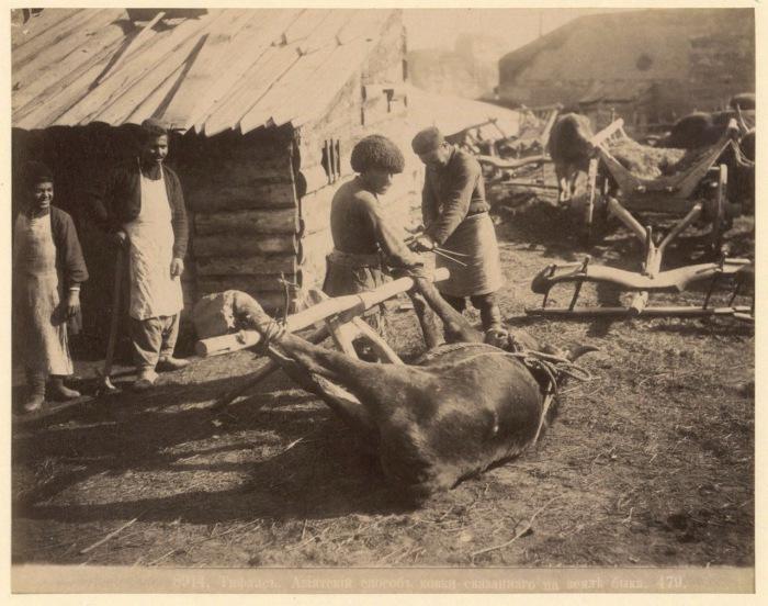 Азиатский способ ковки быка. Тифлис, 1890 год.