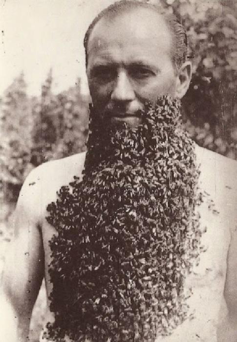 Мужчина с бородой из пчел, 1960-е годы.