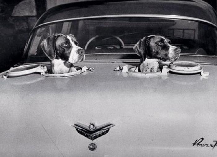 Оригинальное изобретение для собак, 1958 год.