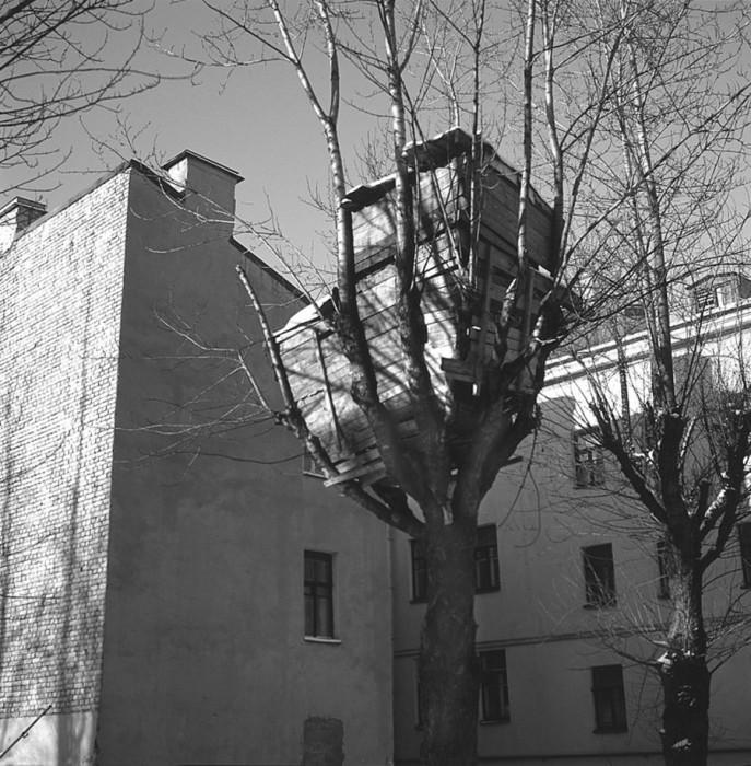 Домик на дереве в одном из дворов Петербурга.