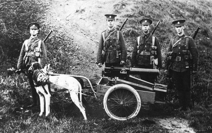 Собачья упряжка, используемая в британской армии для транспортировки пулемета и боеприпасов.
