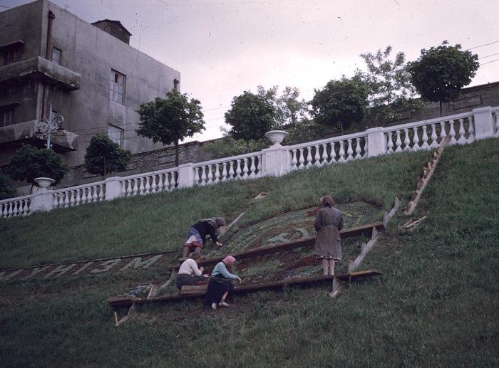 Женщины, украшающие газон. СССР, Харьков, 1959 год.