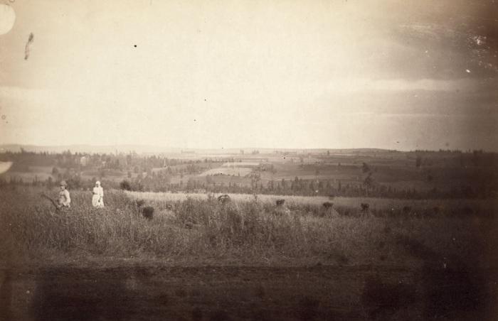 Женщины собирают урожай вблизи Красноярска.