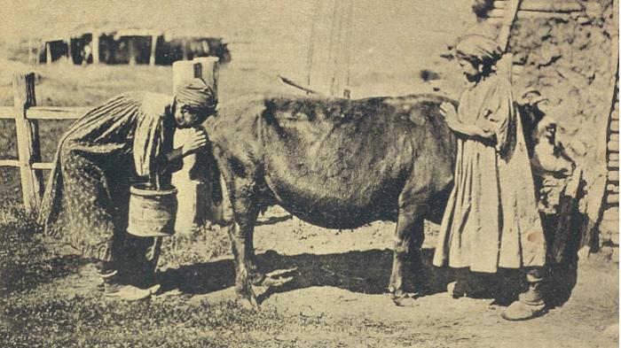 Якутки пришли доить корову. Якутская область, начало 20 века.