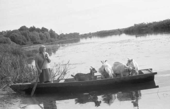 Крестьянка переправляет коз на другой берег реки Сож.