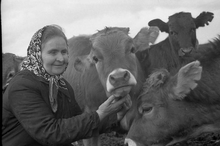 «Я коров люблю как своих детей, свою семью...»