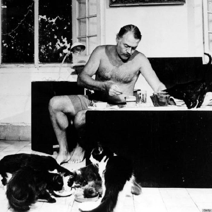 К 1945 году у Эрнеста Хемингуэя дома обитало 23 пушистых любимца.