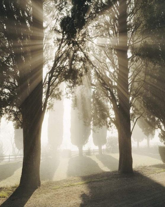 «Обжигающие солнечные лучи». Италия, Тоскана, 2002 год.
