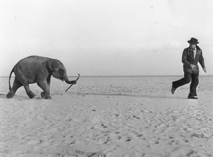 Люди и животные на фотографиях, которые несут заряд радостного настроения миру.