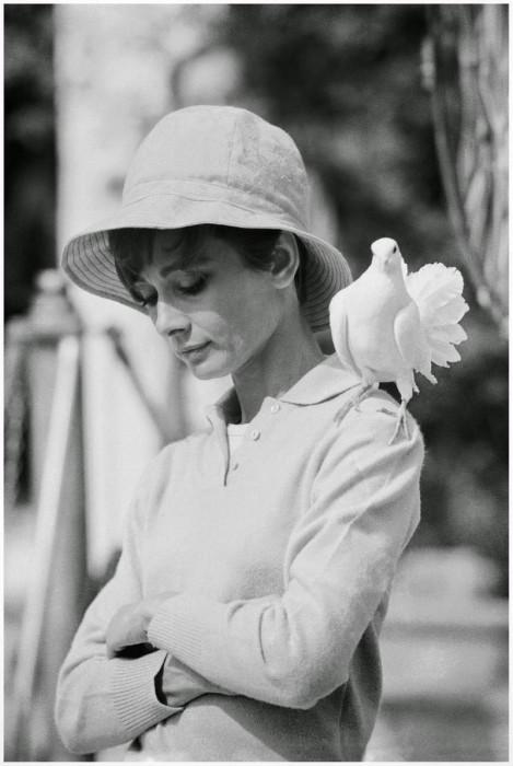 Британская актриса и фотомодель, 1966 год.