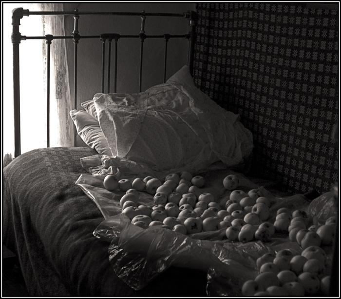 Недавно собранные яблоки, готовящиеся для консервации.