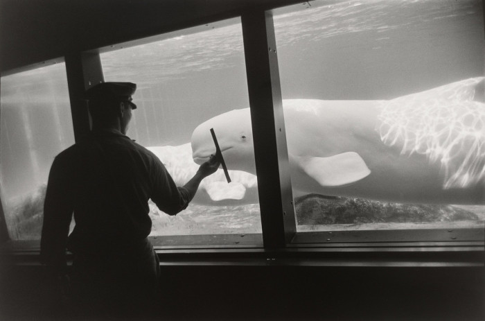 Самый старый непрерывно действующих океанариум в США. Нью-Йорк, 1963 год.