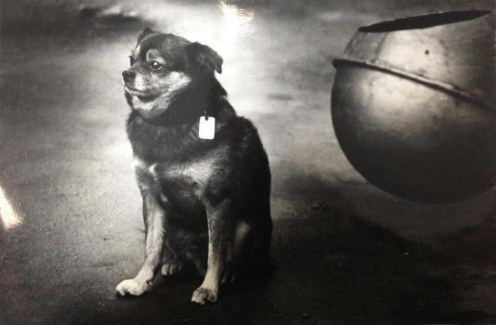 Собака с видом на жительство.
