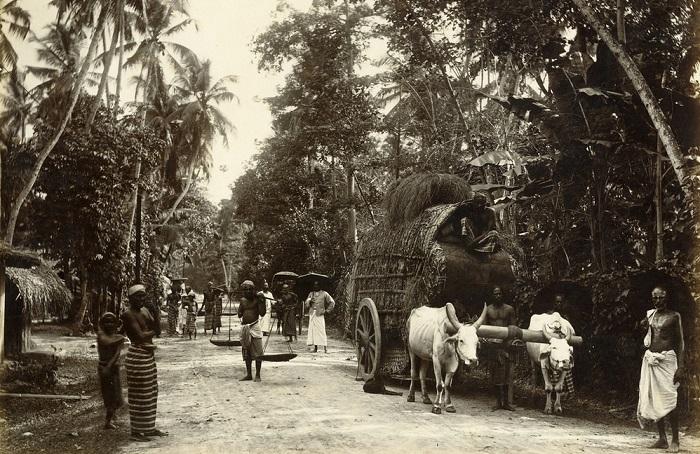 Повседневная жизнь сингальцев в 1880-х годах на чёрно-белых фотографиях.