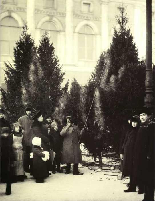 Торговля ёлками в Екатерининском саду. Россия, Санкт-Петербург, 1913 год.