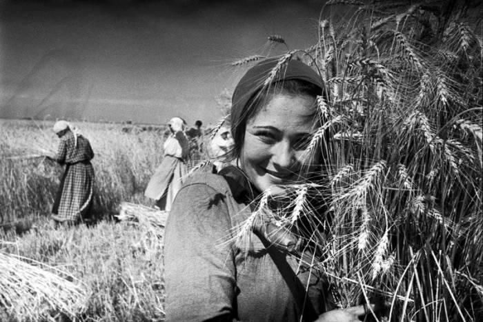 Сельскохозяйственная бригада, 1930-е годы.