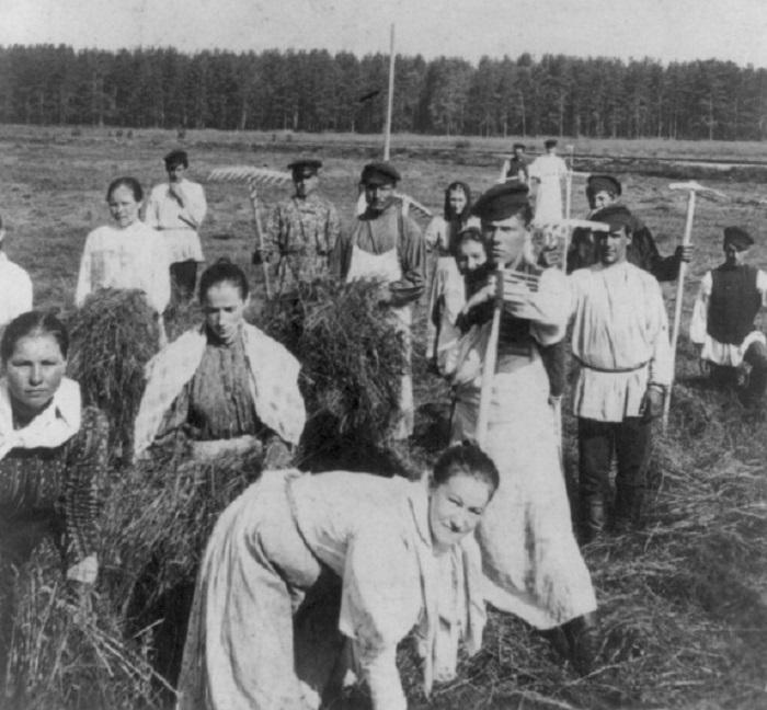 Заготовка сена в России в 1897 году.