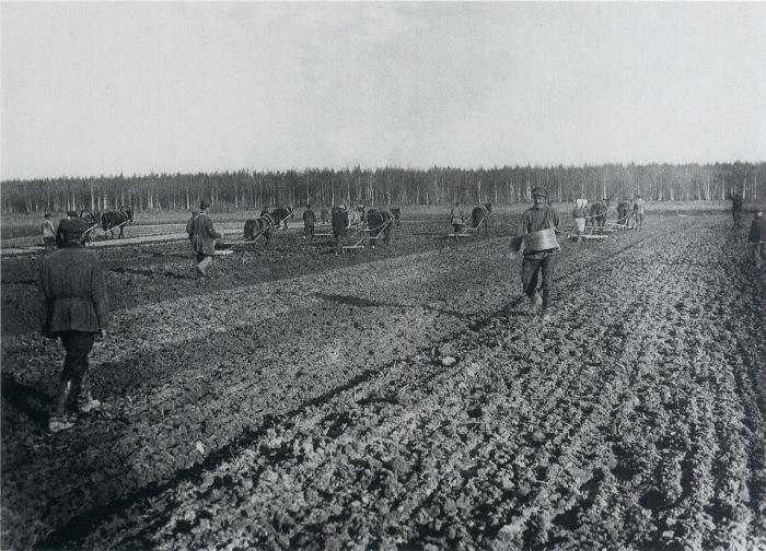 Крестьяне засевают поле. Россия, 1900-е годы.