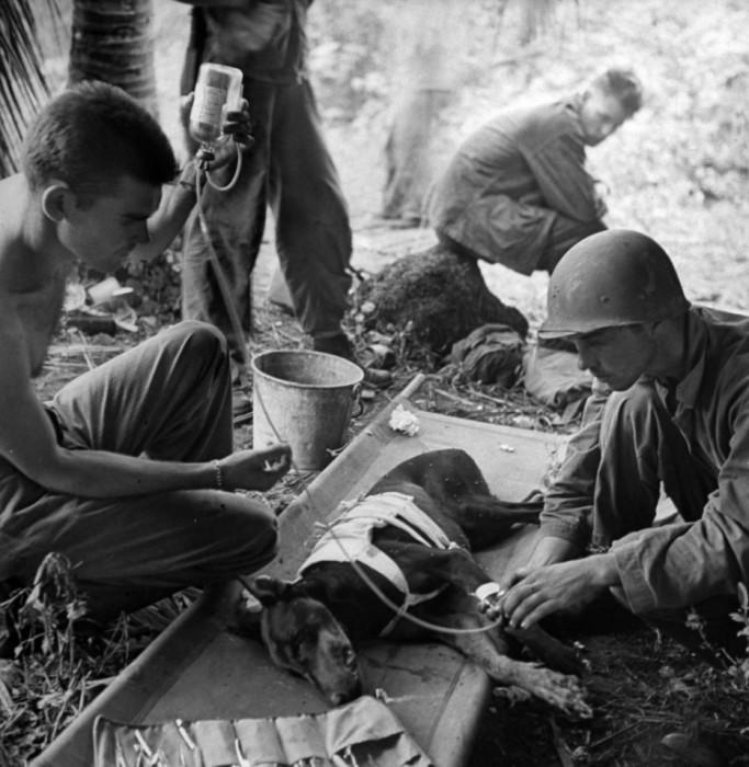 Американские солдаты лечат раненую собаку, 1944 год.