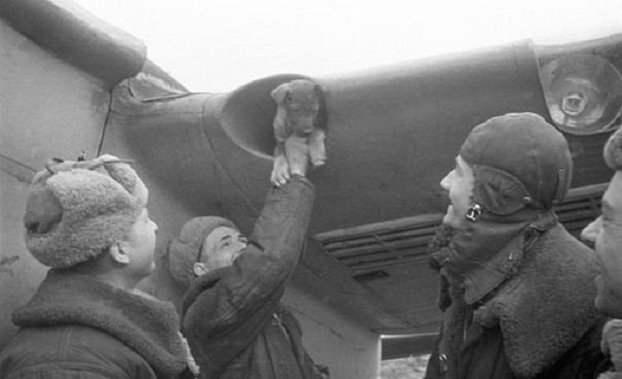 Советские летчики достают щенка, который пригрелся в воздухозаборнике крыла самолета, 1942 год.