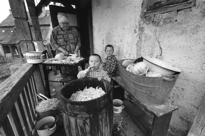 Прекрасная традиция заготовления квашенной капусты на зиму, которая с давнего времени практикуется в России.