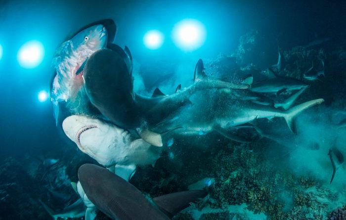 Подводный фотограф года Ричард Барнден.