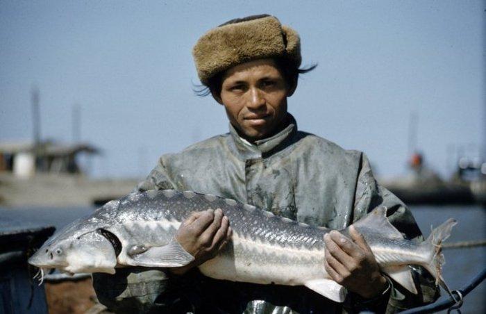 Рыбак с осетром. СССР, Астраханская область, 1960-е годы.