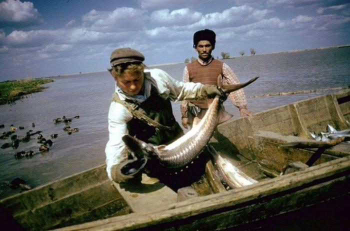 Местный рыболов. СССР, Астраханская область, 1960-е годы.