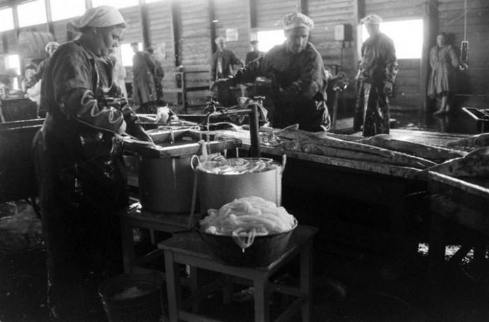 Рыбная промышленность. СССР, Астраханская область, 1960-е годы.