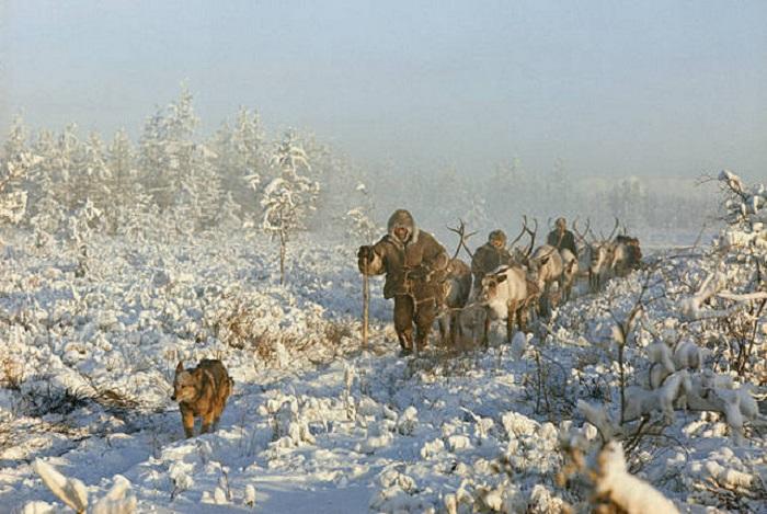 Якуты в тайге, охотятся за горностаем.