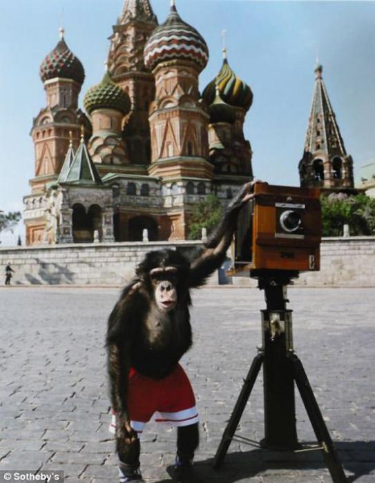 Шимпанзе, которого Виталий Комар и Александр Меламид учат делать фотографии на Красной площади.
