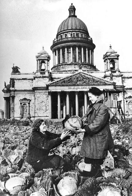 Сбор урожая капусты в блокадном Ленинграде возле Исаакиевского собора.