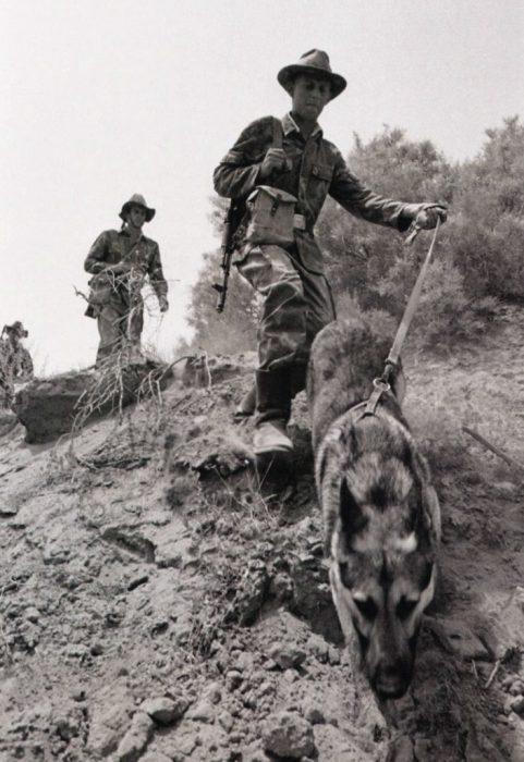 Снимок собаки, сделанный в Афганистане во время боевых действий.