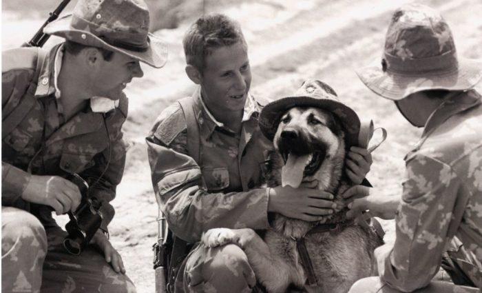 Собака на службе в Афганистане. Автор фотографии: Вячеслав Киселёв.