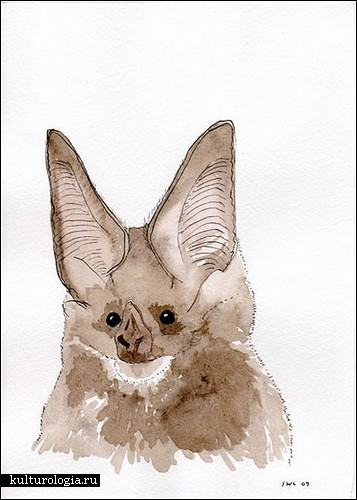 Летучие мыши на картинах Шона Кридена (Shawn Creeden)