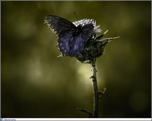 Завораживающие фотографии природы(Diane Varner)
