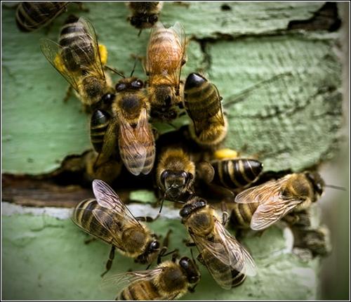 Завораживающие фотографии природы (Diane Varner)