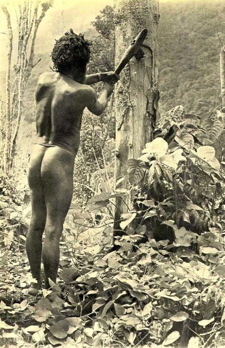 Бергпапоэа вырубает дерево каменным топором.