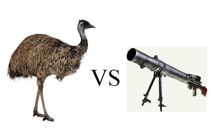 Великая война австралийцев со страусами эму картинки